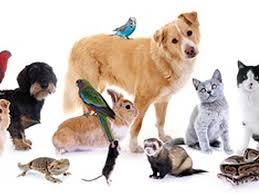 reiki pour animaux