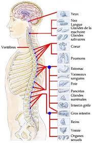 Tous les maux du dos